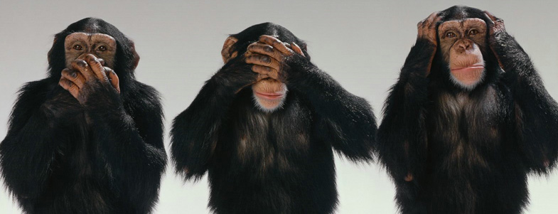 featured_image_chimps