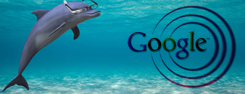 featured_google_dolphin