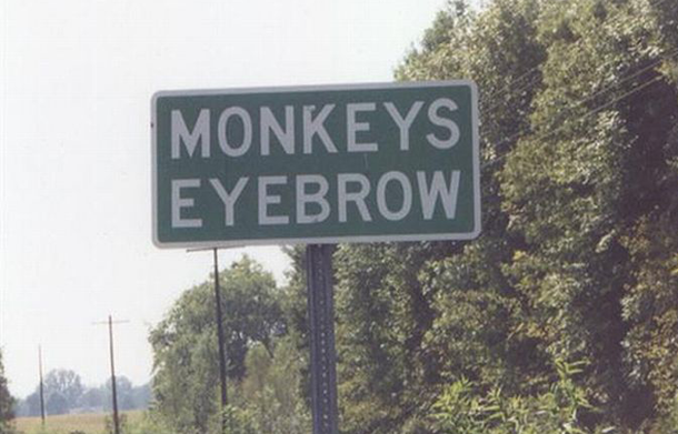 monkeyseyebrowkentucky